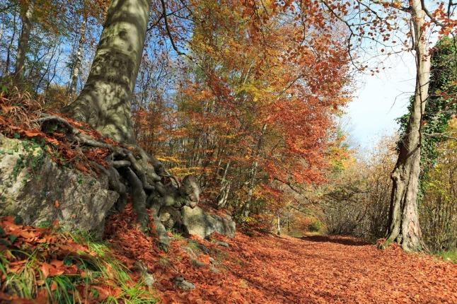 Forêt de Coye Patrick Drouin